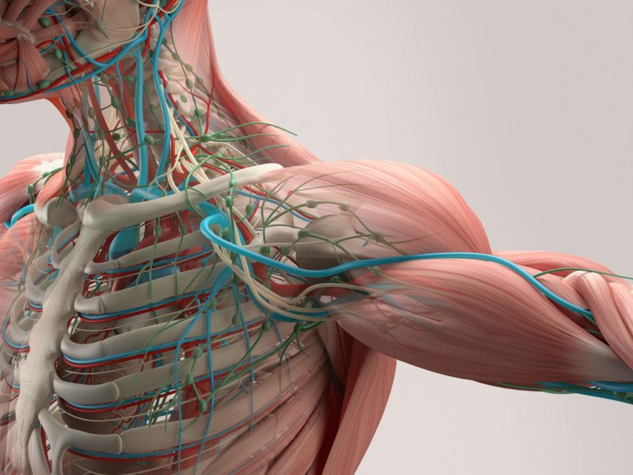 Anatomie – Dennis Wagner